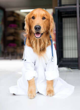 Beautiful cute dog dressed as a vet photo
