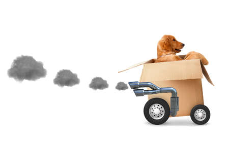 fast delivery: Dog in a cardboard box - fast delivery concetps Stock Photo