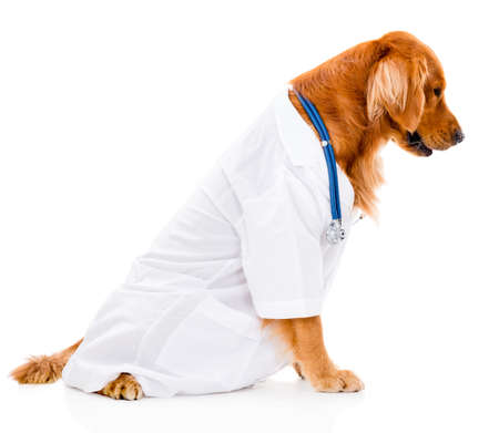 Cute dog dressed as a vet - isolated over white background photo