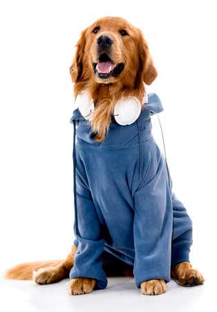 raperos: Perro vestido con raperos ropa - aislados en un fondo blanco Foto de archivo