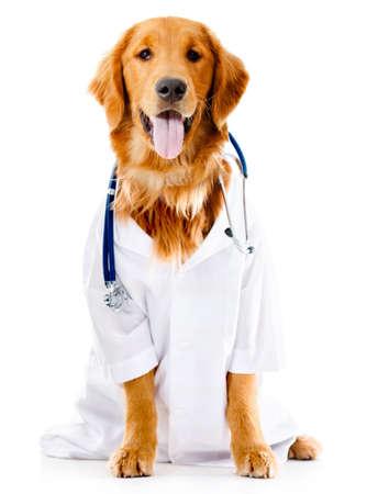 Hund als Arzt oder Tierarzt gekleidet - isoliert über weißem Hintergrund Lizenzfreie Bilder