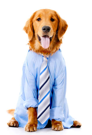 business costume: Dog dressed in a business suit - isolated over a white background