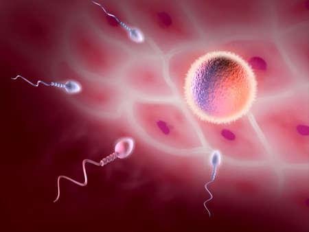 Sperm cell trying to reach a female ovum. Digital illustration illustration