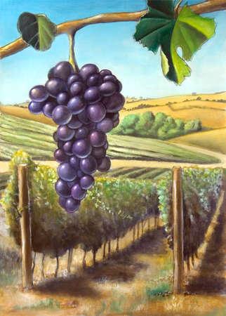 De raisin et de vignes. Convient pour les �tiquettes de vin. Mon illustration original peint � la main.