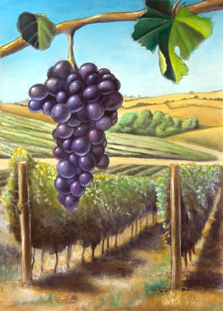 Grape and vineyard. Suitable for wine labels. My original hand painted illustration.