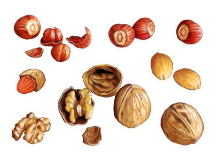 hard crust: Assorted nuts: walnuts, almonds and hazelnuts. Digital illustration Stock Photo