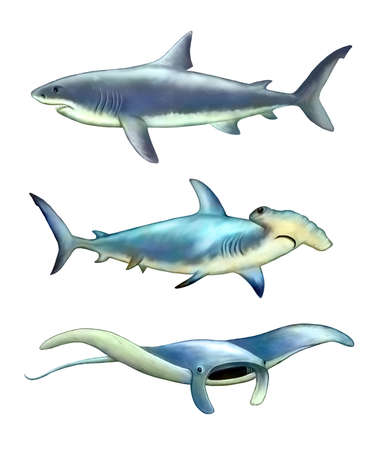 White Shark, Hammerfish und Mantarochen. Digitale Illustration.