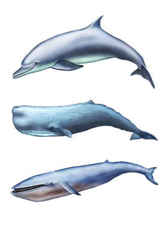 Dolphin, sperm whale and blue whale. Digital illustration. Banco de Imagens