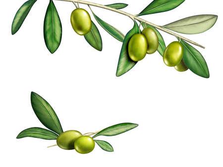 rama de olivo: Aceitunas varios sobre una rama. Ilustraci�n digital Foto de archivo