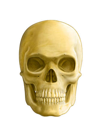 face surgery: Human skull, front view. Digital illustration