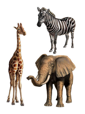 Giraffe, elephant and zebra. African wildlife, original digital illustration.