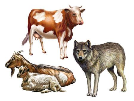 poaching: Wolf, cow and goats. Farm animals, original digital illustration