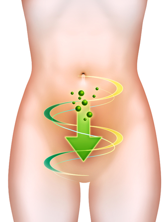 Bowel health, suitable for use on bowel supplement labels like pro-biotic. Digital illustration.