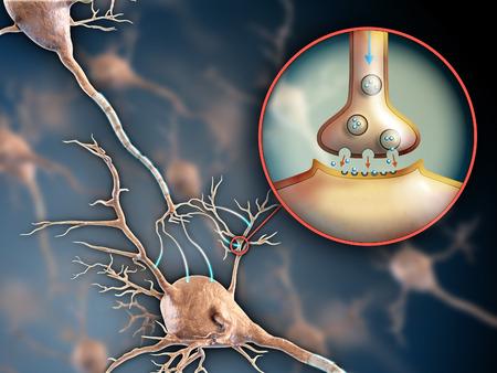 Due neuroni connettono utilizzando trasmissioni elettrochimici. Illustrazione digitale. Archivio Fotografico - 31970309