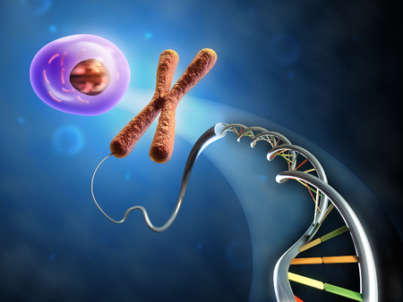 Illustration showing the formation of an animal cell from dna and chromosomes. Digital illustration.
