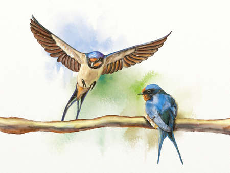 Two barn swallows, one resting on a branch and another landing on the same branch. Digital watercolor illustration. Фото со стока