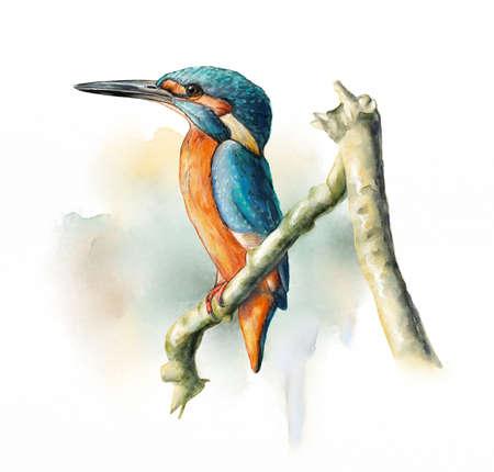 Wetland birds, King Fisher. Original watercolor. Banco de Imagens