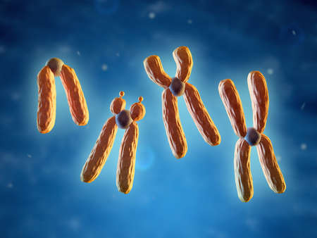 Classification of chromosomes, based on the position of centromere. 3D illustration.