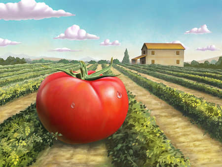 Giant ripe tomato in a rural landscape. Digital painting. Stock Photo