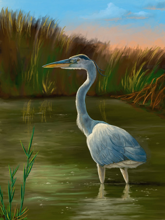 Blue heron fishing in a pond. Original digital painting.