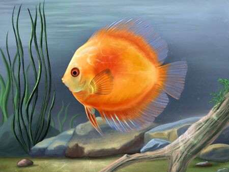 Discus fish, Symphysodon aequifasciatus, swimming in an underwater environment with stones and plants. Digital painting. Stock Photo