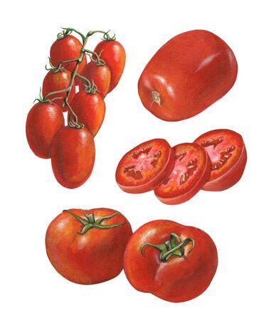 Some tomato varieties. Mixed media illustration on paper.