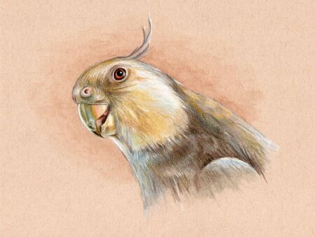 Portrait of a white-faced cockatiel. Mixed media illustration on toned paper. Stock Photo