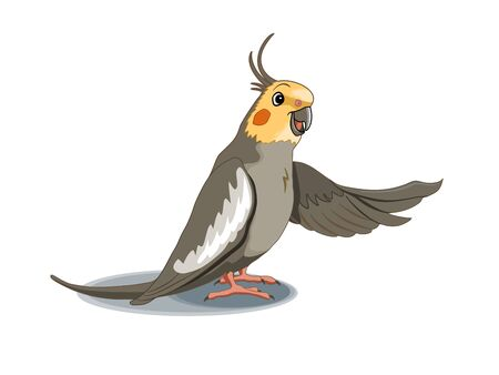 Cartoon smiling cockatiel pointing with its wing. Vector illustration Stock Photo