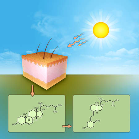 The synthesis of vitamin D through UV rays skin exposure. Digital illustration. Stock Photo