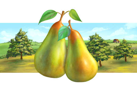 Pear orchard and rural landscape, suitable for label designs. Digital illustration ,.