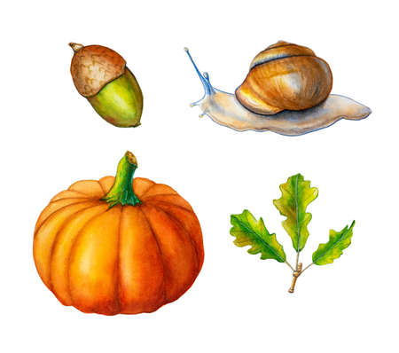 Some autumn inspired watercolor drawings, including some leaves, an acorn, pumpkin and a snail. Traditional watercolor illustration.