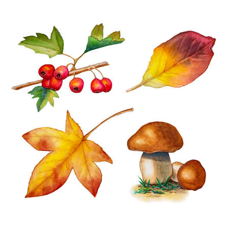 Some autumn inspired watercolor drawings, including some leaves, berries and mushrooms. Traditional watercolor illustration.
