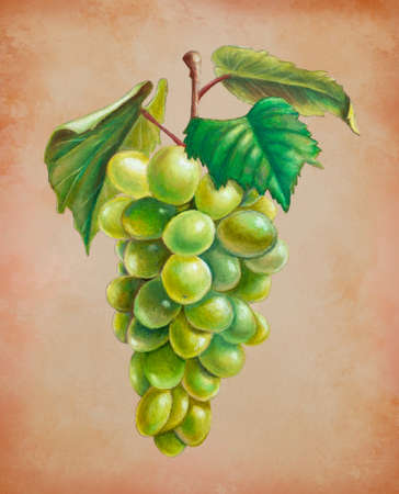Oil pastel painting of some white grapes. Traditional illustration on toned paper.