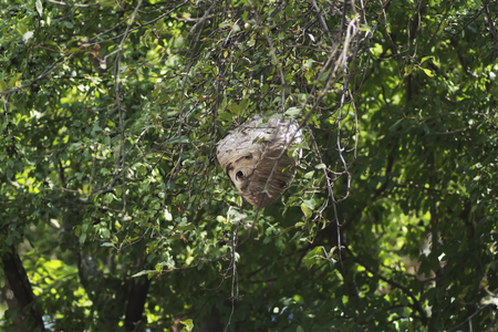 A side view of a dangerous wasp nest in the distance.