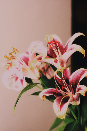 A close up of bouquet of lilies.