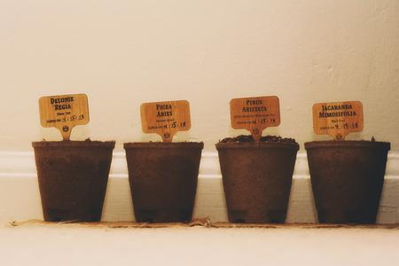 The start of planting bonsai trees inside.