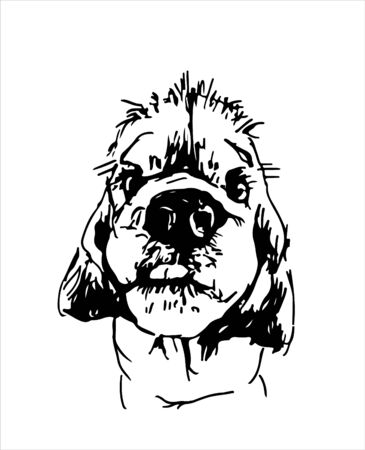 A sketch of a portrait of a dog. Muzzle of an American Cocker Spaniel. Design, print for t-shirts. Vector illustration Çizim