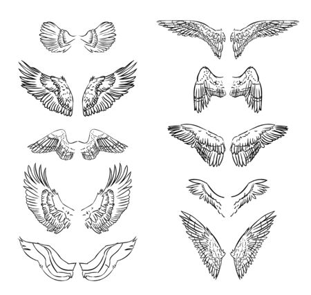 Hand drawn wing set.Sticker wing tattoo.Doodle and sketch style wing of bird tattoo