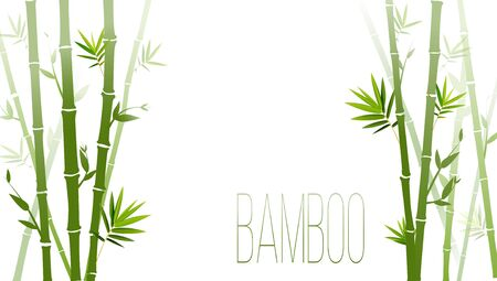 Vector green bamboo stems and leaves isolated on white background with copy space  イラスト・ベクター素材