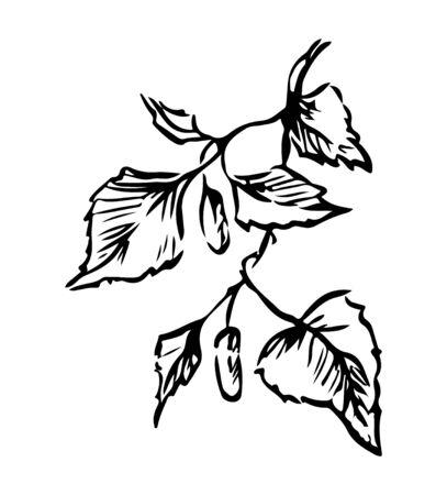 Vector sketch of a birch branch