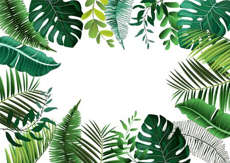 Vector tropical botanical plants with coconut and banana leaves - vector graphic Vettoriali