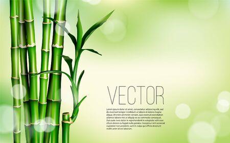 Illustration stock de papier peint oriental chinois ou japonais en herbe de bambou. Fond de plantes asiatiques tropicales. Illustration vectorielle
