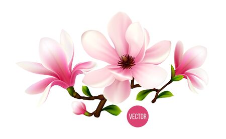 Magnolia branch isolated on white background. 3d realistic vector icon Vektoros illusztráció