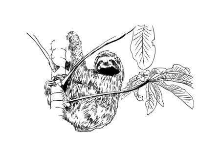 Black and white drawing, sketch of an isolated sloth. Hanging on a tree. Vector illustration
