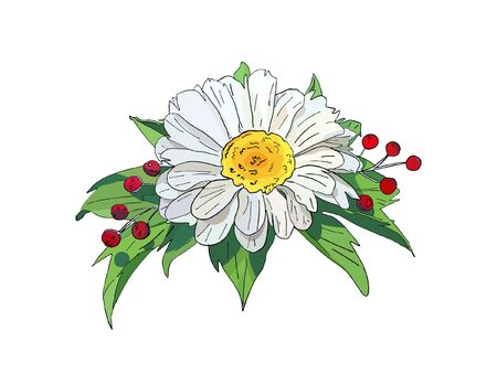 Chamomile isolated on white background. Vector illustration of white daisies flowers with green leaves in cartoon flat style