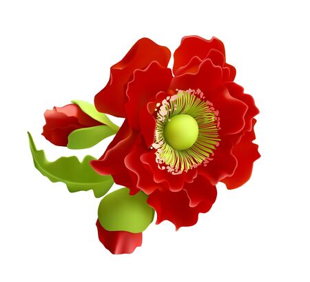 Vector red poppy flower blooming closeup. Isolated illustration on a white background. Realistic hand drawn blossom with stem. Floral design object. Summer, spring sign, symbol.
