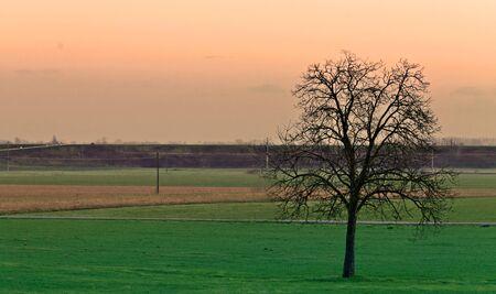 Alone tree in green field photo