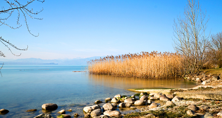 marginal: Reeds and the lake are peaceful Stock Photo