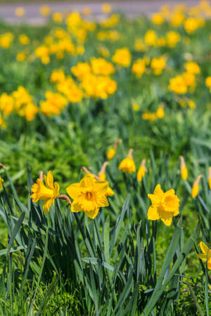 pretty spring flowers growing in the sunshine