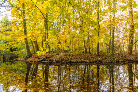 autumn forest by shore of lake Stock Photo